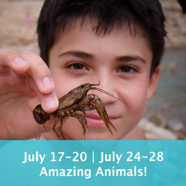 July 17-20 | July 24-28 Amazing Animals! Bugs, Birds & Bobcats